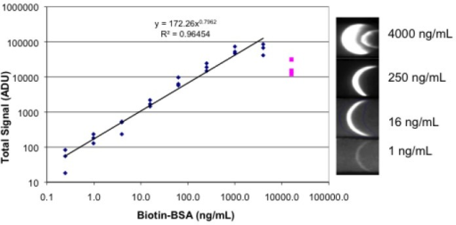 Fluorescence lateral flow images and plot. A spot rather than the conventional stripe of streptavidin was applied to the nitrocellulose. The spot diameter was approximately 3 mm. Dilutions of biotinylated BSA, followed by R-PE streptavidin, followed by buffer were absorbed onto the strips. Each concentration was tested in triplicate. Images were obtained in a breadboard equipped with an iPhone 4 and ProCamera app; a sample of the images is shown on the right. Image analysis was done with Image J and the results plotted.