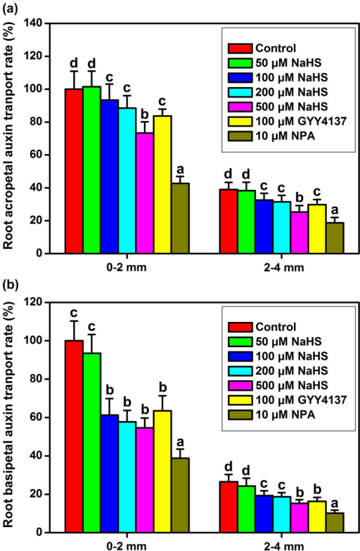 H2S regulates polar auxin transport in WT Arabidopsis root.Root acropetal auxin transport (a), and basipetal auxin transport (b) were assayed after various treatments for 12 h in 5-d-old seedlings. Mean values and SE are calculated from three replicates. Within each set of experiments, bars with different letters are significantly different (P < 0.05, Duncan's multiple range tests).