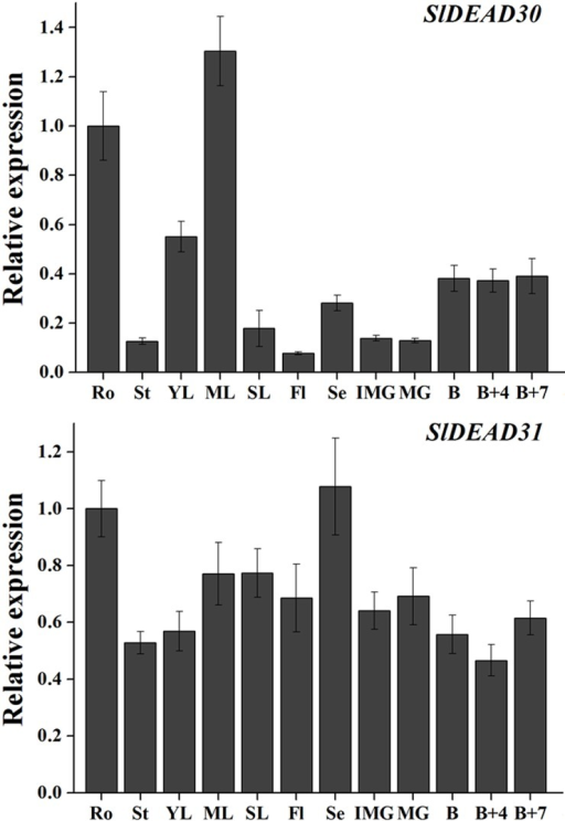 Expression profiles of SlDEAD30 and SlDEAD31 genes in different tissues of wild-type tomato.Ro, roots; St, stems; Yl, young leaves; Ml, mature leaves; Sl, senescent leaves; Fl, flowers; Se, sepals; IMG, immature green fruits; MG, mature green fruits; B, breaker fruits; B+4, 4 day after breaker stage; B+7, 7 day after breaker stage. The relative expression levels were normalized to 1 in the roots. Bars represent mean relative expression values ± SE (n = 3).