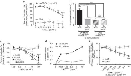 LukED inhibition of LukSF-PV-mediated toxicity on PMN-HL60 cells and primary human neutrophils.(a) PMN-HL60s were incubated with 1 μg ml−1 LukSF-PV or PBS in the presence of increasing concentrations of LukED. After 1 h incubation, cell lysis was monitored by measuring LDH release. (b) Culture supernatants from WT MW2 (WT LukSF-PV+) and an isogenic MW2 strain lacking lukSF-PV (ΔlukSF-PV) transformed with a plasmid overexpressing LukED (pOS-lukED), or a control plasmid (pOS) were incubated with PMN-HL60 cells at a final concentration of 10% (v/v). The formation of toxin-mediated pores in the plasma membrane of PMN-HL60s was monitored by ethidium bromide incorporation. (c) PMN-HL60 cells were first incubated with 1 μg ml−1 LukS-PV, any unbound LukS-PV washed away followed by addition of LukE and/or LukD, and finally, 1 μg ml−1 of LukF-PV. After 1 h incubation, cell lysis was monitored by measuring LDH release. (d) Binding of fluorescently labelled LukD680 nm to PMN-HL60 cells, in the presence or absence of 0.25 μg ml−1 LukS-PV monitored by fluorescence-activated cell sorting. (e) Primary human neutrophils were incubated with 50 ng ml−1 LukSF-PV with increasing concentrations of LukE or LukD. After 1 h incubation, cell metabolism was monitored using the CellTiter reagent. Results represent the averages from three or more independent experiments±s.e.m. *P<0.05, **P<0.01, ***P<0.001 and ****P<0.0001 using one-way (b) or two-way analysis of variance (a,c,e). Results in part D are representative of three independent experiments.