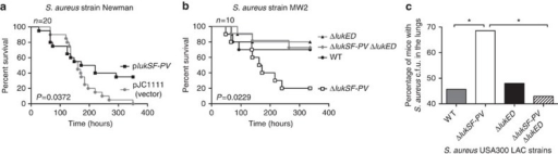 LukSF-PV inhibition of LukED attenuates S. aureus in vivo.(a) 'Survival' of mice infected with the isogenic Newman strains carrying the integrated empty plasmid (Newman::pJC1111; n=20) or the lukSF-PV containing plasmid (Newman::plukSF-PV; n=20). (b) 'Survival' of mice infected with the isogenic USA400-MW2 strains (n=10). (a,b) Each mouse was infected intravenously with 5 × 107 colony-forming units (c.f.u.) S. aureus. 'Survival' curves were compared using the log-rank (Mantel–Cox) test. (c) Pulmonary infections were established in mice by instilling 2 × 108 c.f.u. of each isogenic USA300-LAC strains intranasally. Lungs were harvested 4 days post infection and plated for S. aureus counts. The data are represented as percentage of infected mice that harboured bacterial c.f.u. in the lungs 4 days post infection (P=0.0451). Statistical significance was determined using Fisher's exact test.