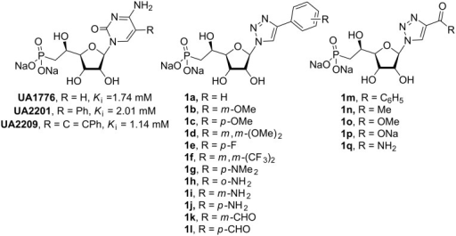 Previous (UA1776, UA2201 and UA2209 [7–8]) and new 1a–q phosphonate derivatives designed as potential cN-II inhibitors.
