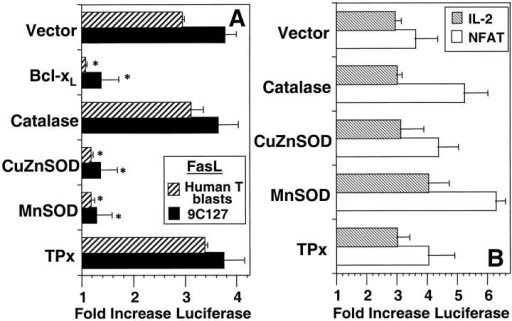 Effect of protein overexpression on anti-CD3–induced reporter plasmid activation. (A) 9C127 cells (solid bars) or human T blasts (hatched bars) were transfected with empty vector (Vector) or expression vectors encoding BCl-xL, catalase, CuZnSOD, MnSOD, or TPx at a 2:1 ratio with one containing a 0.5 kb portion of the FasL promoter inserted into a luciferase reporter vector. (B) 9C127 cells were transfected with the same vectors at a 2:1 ratio with luciferase reporter vectors containing the minimal IL-2 promoter (hatched bars) and a multimerized NFAT binding site (open bars). Anti-CD3–stimulated luciferase activity in cell lysates was measured by chemoluminescence as described in Materials and Methods. Data are expressed as fold induction of luciferase activity over unstimulated and represents the average of at least four experiments. *Significantly different from Vector transfected controls (P < 0.05).