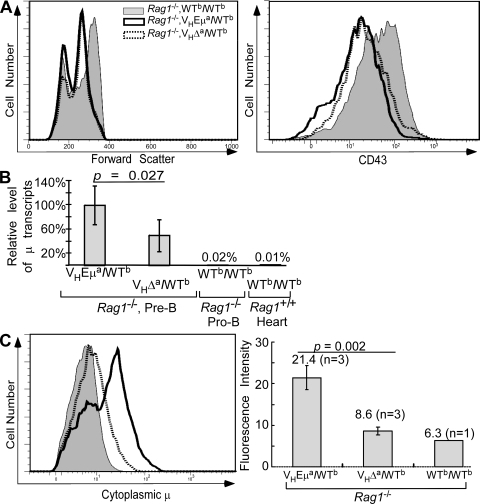 Igμ transcription and cytoplasmic Igμ protein levels in pre-B cells of mutant mice. (A) B220+ lymphocytes from BM of Rag1-deficient WTb/WTb, VHEμa/WTb, and VHΔa/WTb mice were analyzed for size (forward scatter) and for CD43 expression by FACS. Data shown are representative of three individual mice of each genotype analyzed. (B) Igμ mRNA levels in cells shown in A. Data were generated by quantitative RT-PCR, normalized to hgprt1 mRNA, and included two experiments, analyzing a total of five individual animals of each genotype. Negative controls were mRNA isolated from pro-B cells of a WTb/WTb Rag1−/− littermate and mRNA from C57BL/6 heart tissue (WTb/WTb, Rag1+/+). Statistical significance (P = 0.027) was obtained by a two-tailed Student's t test. Error bars show SD. (C) Cytoplasmic Igμ levels in B220+ BM cells of Rag1−/− mice. Left, histograms of cytoplasmic Igμ. Right, mean Igμ fluorescence in pre-B cells from multiple mice (n = number of mice analyzed). Error bars show SD.