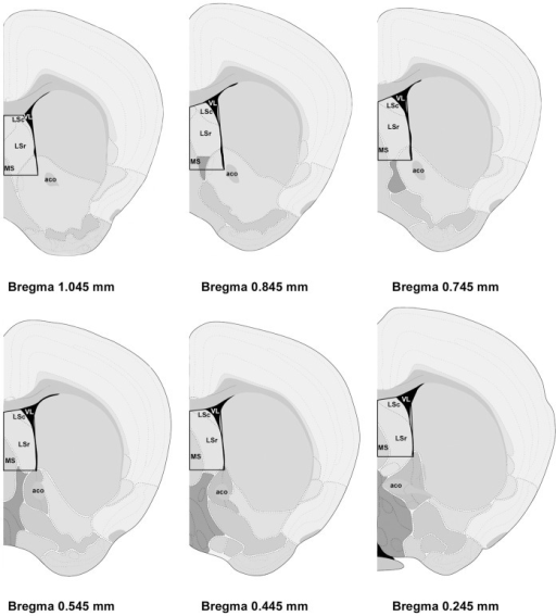 Schematic representation of the brain regions (boxed areas) dissected for gene array analysis.Distance from Bregma in the rostrocaudal planes is indicated. Reprinted and modified from The Allen Mouse Brain Atlas (reference atlas version 1, 2008). Abbreviations: LSc, caudal part of lateral septal nucleus; LSr, rostral part of lateral septal nucleus; MS, medial septal nucleus; VL, lateral ventricle; aco, anterior commissure, olfactory limb.