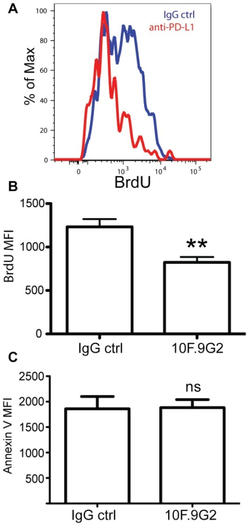 PD-L1 augments Ag-specific CD8 T cell proliferation.A, and B, Brdu incorporation of OVA tetramer+CD8+ T cells. Mice were administered BrdU 16 hrs before sacrificing on day 5 after i.v. LM infection with or without PD-L1 blockade. C. Annexin V staining of tetramer+ cells. Data were analyzed by Student's t test, (**p<0.01). Data are representative of three independent experiments with five mice per group.