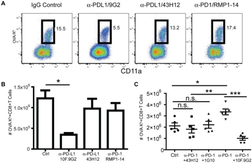 PD-L1-mediated costimulation occurs independently of known CD80 or PD-1 interactions.Representative dot-plots (A) and total cell numbers (B) of the OVA257–264/Kb-specific splenic CD8 T cell response eight days after LM infection from mice treated with IgG isotype control, anti-PD-L1 (10F.9G2), or with an mAb that blocks PD-L1 interaction with CD80 (43H12), or with anti-PD-1 (RMP1-14). C, Total numbers of OVA257–264/Kb-specific splenic CD8 T cells eight days after LM infection from mice treated with IgG isotype control, anti-PD-1 (RMP1-14), anti-PD-L1 (10F.9G2), both anti-PD-L1(10F.9G2) and PD1(RMP1-14), both anti PD-1(RMP1-14) and 43H12 or both anti-PD-1(RMP1-14) and anti-CD80 (1G10). Data are representative of three independent experiments with five mice per group. Data were analyzed by two-way ANOVA, (*p<0.05, **p<0.01, ***p<0.001, n.s., not significant).