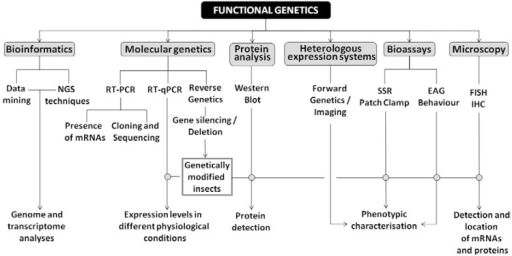 Workflow scheme for the study of functional genetics underlying triatominebehaviour. EAG: electroantennogram; FISH: fluorescence in situhybridisation; IHC: immunohistochemistry; NGS: next-generation sequencing; qPCR:quantitative polymerase chain reaction; RT: reverse transcription; SSR: singlesensillum recording.