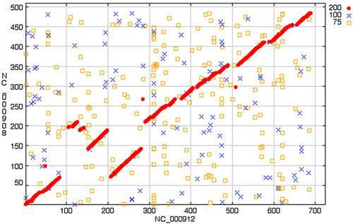 GeneOrder3.0 analysis of Mycoplasma genitalium (NC_000908) versus Mycoplasma pneumoniae (NC_000912). BLAST scores are set at the defaults of 200, 100 and 75 as represented by the dots, crosses and open squares, respectively.