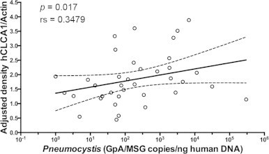 hCLCA1 expression positively correlates with Pneumocystis organism's load (Spearman rs=0.34785; P=0.0171). Correlation graph of hCLCA1 protein expression levels compared with Pneumocystis burden as determined by qPCR. Linear regression was performed and the fitted line is showed on the graph. Broken lines represent 95% confidence intervals.