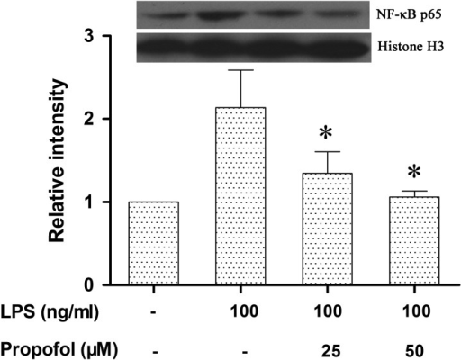 Propofol inhibits the nuclear translocation of the NF-κB p65 protein in LPS-stimulated canine PBMCs. Canine PBMCs were pretreated with different doses of propofol (0, 25 or 50 µM) for 6 hr and then stimulated with LPS (100 ng/ml) for 1 hr. The NF-κB p65 protein was analyzed by Western blotting. Histone H3 was used as a loading control. Densitometry was normalized to Histone H3 and graphed as the mean ± S.D. *indicates P<0.05 (compared with LPS stimulation alone). Similar results were obtained from three independent experiments.