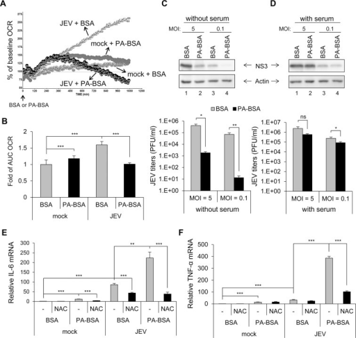 Impaired long-chain fatty acid (LCFA) β-oxidation and induction of reactive oxygen species (ROS)-dependent pro-inflammatory cytokines in cells infected with Japanese encephalitis virus (JEV).(A and B) A549 cells infected with JEV (multiplicity of infection [MOI] = 10) for 5 h were replenished with serum-free medium for 1 h, then treated with 200 μM palmitate conjugated to bovine serum albumin (BSA) (PA-BSA) or BSA control. (A) Real-time oxygen consumption rate (OCR) measured from 6 to 24 h post-infection (hpi). The OCR before PA-BSA or BSA treatment was set to 100%. (B) The area under the curve (AUC) OCR compared to that for mock cells treated with BSA (n = 3 per group). (C and D) A549 cells infected with JEV (MOI = 5 and 0.1) for 5 h were changed to medium without serum (C) or with serum (10% FBS) (D) for 1 h. Cells were then treated with PA-BSA or BSA for 18 h before Western blot analysis of protein levels of JEV NS3 and actin in cell lysates and virus titration in culture supernatants by plaque-forming assay (n = 3). (E and F) A549 cells were treated with N-acetylcysteine (NAC) 1 h before JEV (MOI = 10) infection and after virus adsorption. At 5 hpi, cells were incubated with serum-free medium for 1 h before treatment with PA-BSA or BSA for 18 h. RT-qPCR analysis of the relative mRNA levels of interleukin 6 (IL-6) (E) and tumor necrosis factor α (TNF-α) (F) (n = 3). Data are mean±SD. *P < 0.05, **P < 0.01, ***P < 0.001 and ns, not significant.