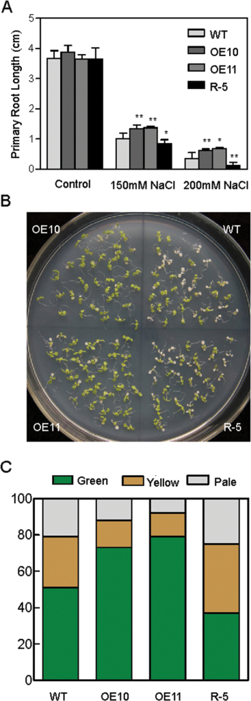 Responses of AtPP2-B11 transgenic and wild-type (WT) plants to salt stress in the seedling stage. (A) Primary root length of 2-week-old plants on ½ MS medium containing different NaCl concentrations. Data show the mean±SD of at least three replicates. (B) Photograph of the AtPP2-B11 transgenic and wild-type plants taken 7 d after being transferred to ½ MS medium containing 200mM NaCl. (C) Percentages of green, yellow, and pale seedlings of different genotypes exposed to 200mM NaCl. (This figure is available in colour at JXB online.)