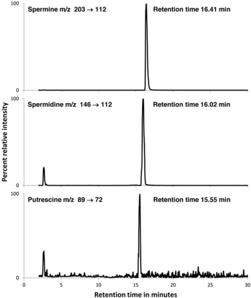 LC/MS/MS-MRM traces for the TCA extract of B. simplex 30N-5. Peaks for spermine (top), spermidine (middle) and putrescine (bottom) are shown. Samples were prepared and analyzed as described in Methods. Co-chromatography experiments in which the authentic compounds were added to the bacterial extract showed single peaks for each trace with appropriate augmentation of the peak areas. A quantitative summary of the results is presented in Table 4.