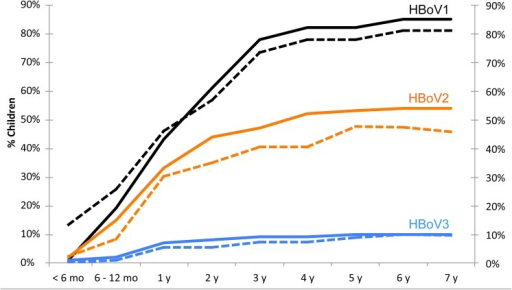 Human bocavirus 1–3 seroprevalences (dashed lines) and cumulative seroconversion rates (solid lines) in different age groups.