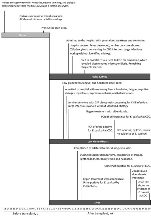 Timeline of events for transplant donor and 3 solid organ recipients with microsporidiosis (Encephalitozoon cuniculi). AVM, arteriovenous malformation; CDC, Centers for Disease Control and Prevention; CNS, central nervous system; CSF, cerebrospinal fluid; DVT, deep vein thrombosis.