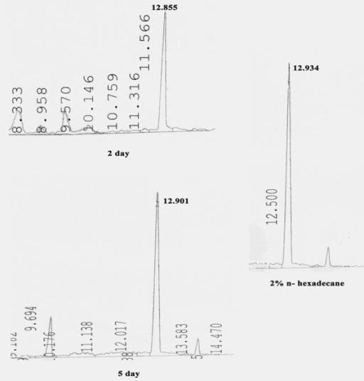 GC analyses of extracted intracellular hydrocarbon from cells of SSC2 at different times of growth. Right panel shows 2% n-hexadecane as standard. Peak at Retention time around 12.9 corresponds to that of n-hexadecane (unmodified substrate).