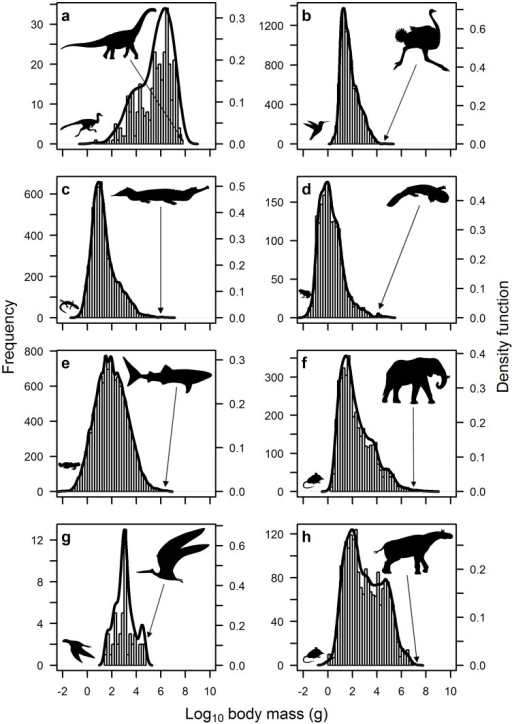Frequency distribution of species body size for eight different animal groups: (a) extinct dinosaurs; (b) extant birds; (c) extant reptiles; (d) extant amphibians; (e) extant fish; (f) extant mammals; (g) extinct pterosaurs; and (h) Cenozoic mammals.Note that all distributions are positively-skewed except for dinosaurs, which are markedly negatively-skewed (see Table 2). A combination of kernel density estimation and smoothed bootstrap resampling was used to test for optimum modality of the body size distributions. Silhouettes of the largest and smallest animal in each group are also shown (provided by Matt van Rooijen).
