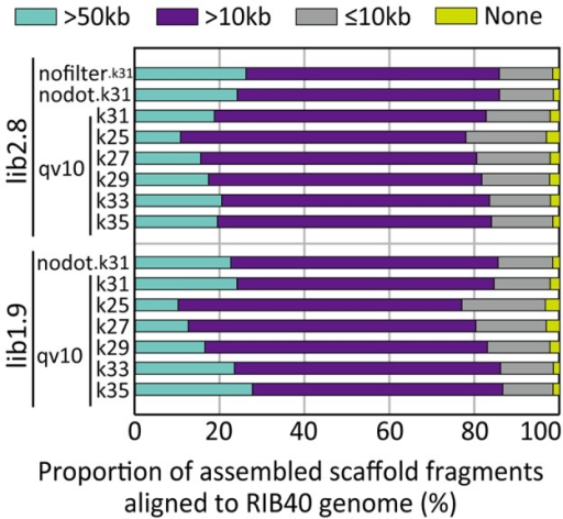 Proportion of assembled scaffold fragments aligned to the Aspergillus oryzae RIB40 reference genome.The length of aligned fragments are indicated by color (bluegreen, >50 kb; purple, >10 kb; gray, ≤10 kb; and yellow, 0 or none). The graph includes the results of the assemblies using lib2.8 and lib1.9 with either unfiltered (nofilter), no undetermined bases (nodot), or QV >10 data. For lib2.8.qv10 and lib1.9.qv10, the results using k-mers of 25 to 35 are included.