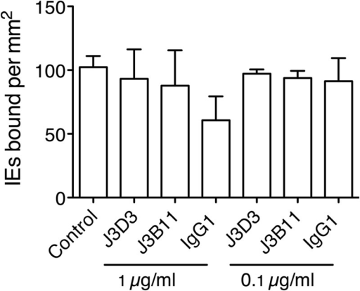 Adhesion of IT/R29 IE to HBEC-5i is not CR1 dependent. Mouse monoclonal antibodies to CR1 were tested for their ability to inhibit adhesion of IT/R29 IE to HBEC-5i, and no significant inhibition was seen. Data shown are the means and standard errors from two independent experiments.