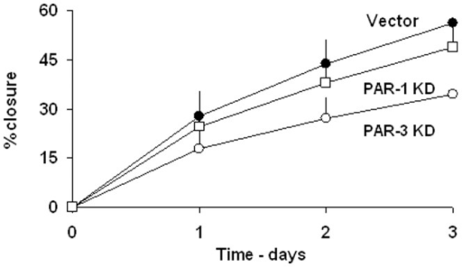 The effects of PARs knockdown on wound closure on wound closure kinetics.Vector control and the desired PARs knockdown cells were seeded at approximately 80% density. The kinetics of wound closure were performed as described in Methods. The results represent mean±SE of 5 independent experiments performed in triplicates. P<0.05 for Vector vs. PAR-3 KD and >0.05 vs. PAR-1 KD.