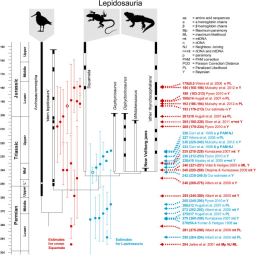 The phylogenetic relationships and fossil record of early lepidosaurs compared to molecular divergence estimates. Estimates for the origin of Lepidosauria based on previous molecular studies are listed on the right in blue with short arrows. Estimates for the origin of crown group Squamata are listed on the right in red with long arrows. Timescale based on Gradstein et al. [47]. Fossil records include those described, or referred to, in Butler et al. [105], Carroll [27], Clark and Hernandez [31], Colbert [30], Evans [8,9,26,33,91], Evans and Białynicka [34], Evans and Jones [5], Evans et al., [18], Fraser [22,23,136], Fraser and Benton [11], Heckert et al. [24], Nesbitt [180], Renesto [137], Reynoso [19,150], Robinson [29], Sues and Hopson [13], Sues and Olsen [12], Whiteside [15], and others listed in Evans et al. [181] and Jones et al. [10].