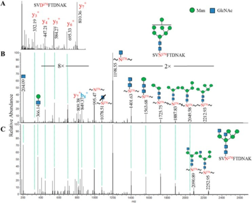 Representative of MS/MS spectra for identification of N-linkedglycopeptides using HCD spectral-aligning strategy. (A) MS/MS spectrumof deglycosylated peptide SVD276FTDNAK provided theinformation on experimentally identified b- and y-ions. (B) MS/MSspectrum of glycopeptide with matched pattern of b- and y-ions tothat of deglycosylated peptide was identified. Additional b-, y-,and Y-ions facilitate identification of the glycopeptide SVN276FTDNAK with Man7GlcNAc2, whichwas used as a spectral template to identify glycopeptides with thesame peptide backbone but different glycan Man5GlcNAc4 in (C).
