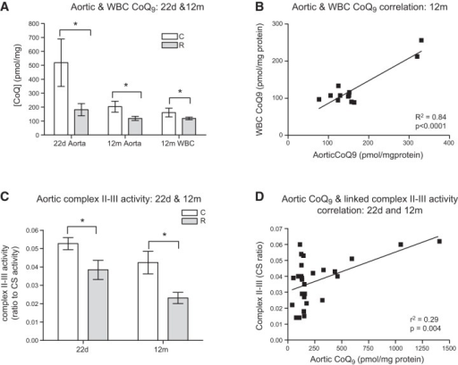 Effect of in utero protein restriction and accelerated postnatal growth on aortic and WBC CoQ9 levels in 22 d and 12 mo rats (A), correlation between aortic and WBC CoQ9 concentrations in 12 mo male rats (B), aortic linked complex II-III activity in 22 d and 12 mo male rats (C), and correlation between aortic CoQ9 levels and linked complex II-III activity in 12 mo male rats (D). Results are expressed as means ± sem. *P < 0.05; n = 6–8/group.