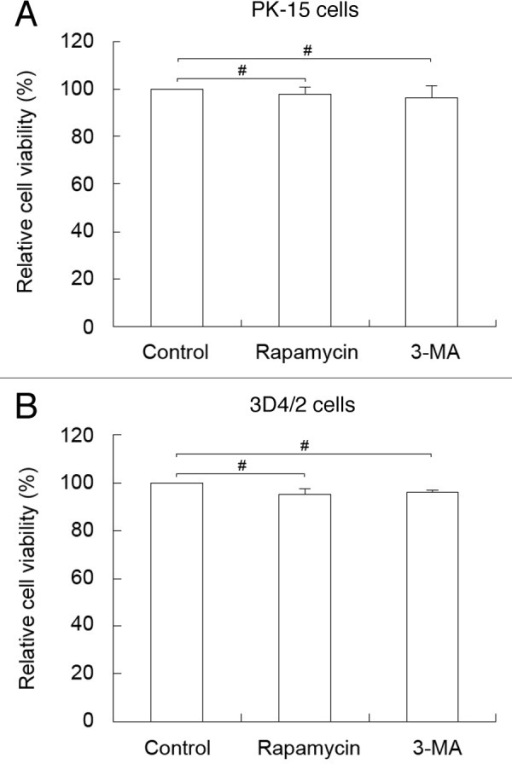 Figure 11. Pharmacological alteration of autophagy does not affect cell viability. The cell viability of PK-15 (A) and 3D4/2 (B) cells were determined by the MTT assay after treatments with rapamycin (100 nM) or 3-MA (5 mM) for 48 h. The data represent the mean ± SD of 3 independent experiments. Two-way ANOVA; #P > 0.05.