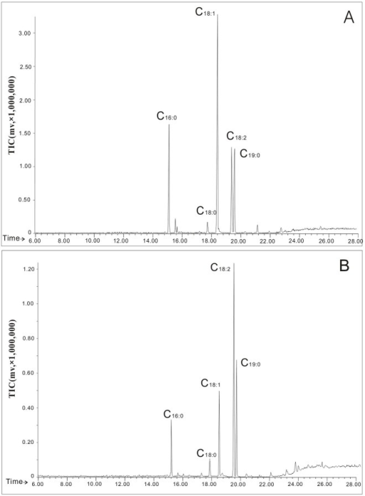 Total ion currents (TIC) of gas chromatography-mass spectrometry for the neutral (A) and polar (B) lipids from Cordyceps sinensis.C16:0, palmitic acid methyl ester; C18:0, stearic acid methyl ester; C18:1, oleic acid methyl ester; C18:2, linoleic acid; and C19:0, methylnonadecanoate as an internal standard.