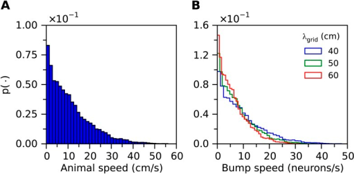 (A) Histogram of velocities of a simulated animal.(B) Histogram of bump speeds derived from the animal velocities estimated in Equation 21, for different grid field spacings.DOI:http://dx.doi.org/10.7554/eLife.06444.042