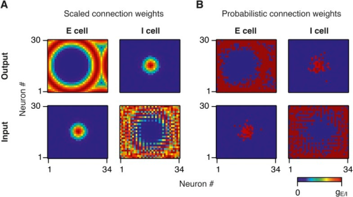 Synaptic weights in scaled and probabilistic variants of the network.(A) Output (top) and input (bottom) synaptic weights of an E (left) and I (right) neuron in the middle of the twisted torus in a network in which synaptic weights are scaled according to the synaptic profile functions from Figure 1B. (B) Same as (A), but synaptic weights are constant and the probability of connection between a pair of neurons is scaled according to the synaptic profile functions in Figure 1B.DOI:http://dx.doi.org/10.7554/eLife.06444.004