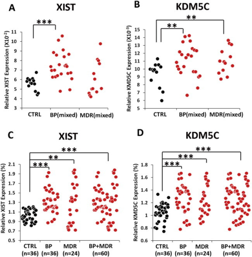 XIST and KDM5C over-expression in additional groups of patients with bipolar disorder or recurrent major depression. Each dot represents a human subject. Black = healthy European Caucasian female controls (CTRL); red = patients with various ethnic backgrounds with either bipolar (mixed BP) or recurrent major depression (mixed MDR). Multiple comparisons of Student's t-tests were corrected with FDR. (A) Significantly larger variations were observed in XIST expression in either bipolar (p = 0.0038, F-test) or major depression (p = 0.0009, F-test). There was significantly higher XIST expression (t(33) = − 5.1, p < 0.00001, unequal variances) in the bipolar patients than in the controls. The mean of XIST expression of major depression group was not significantly different from the mean of the control group. (B) There is no difference in the variation of KDM5C expression between groups. Significantly higher expression of KDM5C was observed in both bipolar (t(34) = − 2.71, p < 0.01) and major depression (t(24) = − 2.84, p < 0.01) than in the controls. (C) Expression of XIST in all individuals was normalized against the mean of the European female controls that were co-cultured. After combining all data, significantly larger variation was observed in XIST expression in bipolar (p = 8 × 10− 5, F-test), major depression (p = 1 × 10− 10, F-test), and their combined group (p = 1 × 10− 8, F-test). In addition to the difference in variation, there was significantly higher XIST expression in bipolar (t(52) = − 6.5, p = 1 × 10− 7, unequal variances), major depression (t(26) = − 2.86, p = 0.004, unequal variances), and their combined group (t(83) = − 5.93, p = 1 × 10− 7, unequal variances). (D) Significantly larger variation was found in KDM5C expression in bipolar (p = 0.002, F-test), major depression (p = 0.004, F-test), and their combined group (p = 0.001, F-test). Significantly higher KDM5C expression was observed in bipolar (t(58) = − 4.9, p = 5.4 × 10− 6, unequal variances), major depression (t(34) = − 3.3, p = 0.001, unequal variances), and their combined group (t(94) = − 5.4, p = 5.3 × 10− 7, unequal variances). (***p < 0.001, **p < 0.01).