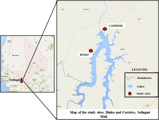 Maps of the study sites, Carrière and Binko. Geographic coordinates of study sites were projected on Google Earth image of June 2013 to illustrate the location of each site according to their position by the lake