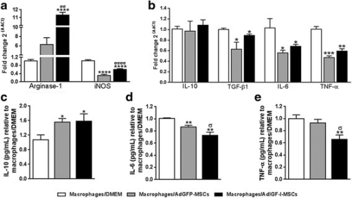 MSCs secrete factors which modulate the hepatic macrophages phenotype. mRNA expression levels of nitric oxide production mediators arginase-1 and iNOS (a) and of cytokines involved in the fibrogenic process (b) in macrophages preincubated 18 hours with DMEM (white bars), or AdGFP-MSCs (gray) or AdIGF-I-MSCs (black) supernatants. Similar comparisons were done at the protein level for IL-6 and IL-10 (supernatants; c and d, respectively) and TNF-α (cytoplasmic extract; e). ANOVA Tukey's post-test; *p < 0.05, **p < 0.01, ***p < 0.001 and ****p < 0.0001 vs. macrophages/DMEM; σp < 0.05, σσp < 0.01 and σσσσp < 0.0001 vs. macrophages/AdGFP-MSCs