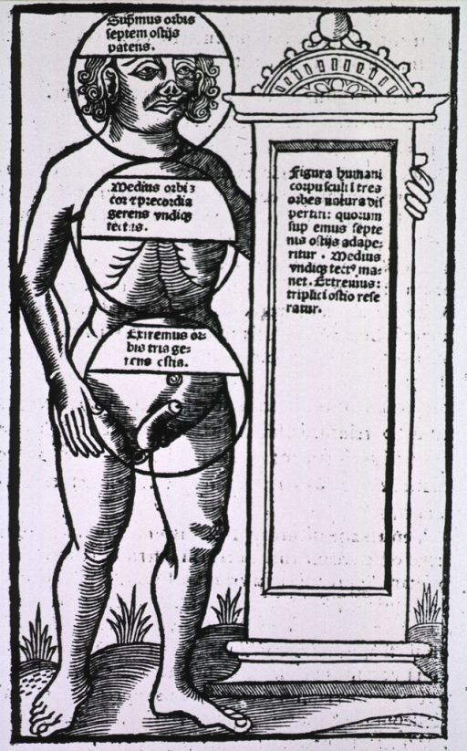 <p>Human figure, standing, with circles dividing him into three vital areas, i.e. the head, chest, and reproductive organs.</p>
