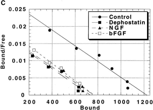 In vivo activation of tyrosine phosphorylation of neurofascin decreases ankyrin binding capacity. (A) Neurofascin-transfected cells were treated with one of the following agents for 30  min: dephostatin (10 μM), NGF (100 ng/ml), or bFGF (50 ng/ml).  HA-labeled neurofascin (250 μg crude cell lysate) was subsequently immunoprecipitated as described above. Immune complexes were captured on protein A–Sepharose beads and electrophoresed on SDS-PAGE. Resolved proteins were transferred to  nitrocellulose and incubated overnight at 4°C with a brain ankyrinspecific polyclonal antibody. After incubation with 125I-labeled  protein A (2 h at 4°C), immunoblots were visualized with autoradiography. (B) Neurofascin-transfected cells were treated as described. HA-labeled neurofascin was immunoprecipitated, and  immune complexes were captured on protein A–labeled latex  beads, washed, and then incubated for 180 min at 4°C with 20 nM  125I-radiolabeled, bacterially expressed 82K membrane-binding  domain of the ankyrinB isoform plus a given amount of unlabeled  82K ankyrinB. After incubation the immune complexes were centrifuged over a 10% sucrose cushion to separate bound and free  radioactivity, and the beads were counted on a γ counter to assess  levels of ankyrin binding. Each point was obtained by averaging  duplicate assays from individual immunoprecipitations. (C) The  ankyrin binding assay data from above was converted into a form  suitable for Scatchard analysis. The tyrosine phosphorylation– induced changes in the Scatchard plots (downward shift with no  change in slope) demonstrate that the total ankyrin binding capacity is decreased with no change in ankyrin binding affinity.  This indicates that phosphorylation of a given neurofascin molecule abolishes its ability to bind ankyrin but does not alter the affinity of remaining neurofascin molecules that have not been  phosphorylated and, thus, maintain ankyrin-binding competence.