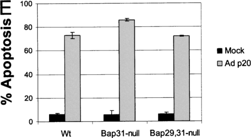 Prolonged expression of p20 induces mitochondrial apoptosis. (A) Expression of p20 in KB cells. Cells were infected with Adp20 and cell lysates were collected and analyzed by immunoblotting at the times indicated post-infection. (B) KB and H1299 cells were infected with Adp20, and effector caspase (DEVDase) activity was measured at the indicated times post-infection by the ability of cell lysates to hydrolyze the fluorogenic caspase substrate DEVD-amc. Shown is a representative experiment. (C) KB cells were mock infected or infected with Adp20 for 35–40 h in the absence or presence of 50 μM zVAD-fmk, and equivalent amounts of post-mitochondrial supernatants were analyzed for the presence of cyt.c by SDS-PAGE and immunoblotting. The membrane was reprobed with anti-actin antibody to confirm equal loading. (D) Parental KB cells, or KB cells stably overexpressing BCL-2 or BCL-xL, were mock infected or infected with Adp20 in the absence or presence of 50 μM zVAD-fmk, and at 45 h post infection, cell death was assessed by trypan blue staining. Shown is mean ± SD of three independent experiments. (E) Wt, Bap31-, and Bap29,31- mouse ES cells were treated and analyzed as in D.