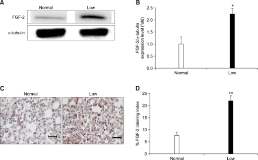 Analysis of fibroblast growth factor 2 (FGF-2) protein in the lungs of mice fed a low Pi diet (0.1% Pi) or a normal (0.5% Pi) diet for 4 weeks. (A) The expression of FGF-2 protein in the lung. (B) The bands-of-interests were further analyzed by using a densitometer. (C) Immunohistochemical measurement of FGF-2 in the lung of transgenic mice. The dark brown color indicates the expression of FGF-2 (scale bar = 100 µm). (D) Comparison of the FGF-2 labeling index in the lungs. p values (*p < 0.05, **p < 0.01) indicate a significant difference compared with normal (mean ± SE, n = 4).