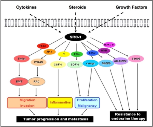 neurotransmitters and their respective receptors in cancer growth For hormone-receptor-positive breast cancer cells, hormonal therapy can be used to interrupt the influence of hormones on the cells' growth and overall functioning if you take the hormone away or block it, as these medications do, the cancer cells are less likely to survive.