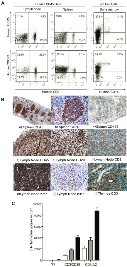 Coreceptor expression and lymphoid organ formation in humanized mice.(A) Representative FACS profile of human CCR5+CD4+ and CXCR4+CD4+ cells in spleen and lymph nodes, gate was set of human CD45 cells. Expression of CCR5 and CXCR4 were checked on CD14+ cells, gate was set on live human cell population. (B) Histology of lymphoid organs in CD34+ engrafted NSG mice. The lymphoid follicles mainly contained hCD45 cells. Spleen sections were stained with (a) anti-hCD45, (b) anti-hCD20 and (c) anti-hCD138. Lymph node sections were also stained with (d) anti-hCD45, (e) anti-hCD20 (f) anti-hCD3 (g,h) anti-hKi67 antibodies. Thymus section was stained with anti-CD3 antibody. (C) Proliferative responses of T cells were measured in nonstimulated cells, after stimulation with immobilized anti-CD3/anti-CD28 and anti-CD3+IL2 in spleen (white bars), lymph nodes (gray bars) and human PBMCs (black bars).