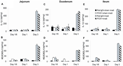 Production of inflammatory mediators in the jejunum, duodenum and ileum.Jejunum, duodenum and ileum were collected and levels of IL-1β and KC/CXCL1 were measured by ELISA of tissue lysates. (A) IL-1β and (B) KC/CXCL1 in jejunum, (C) IL-1β and (D) KC/CXCL1 in duodenum, (E) IL-1β and (F) KC/CXCL1 in ileum. Data are shown as Mean±SD (n = 4). Two way ANOVA showed significant interactions over time between treatments (all p<0.01). No differences were detected between PC61+irradiation compared to Rat IgG+irradiation treatment group profiles over time in the levels of IL-1 β (p≥0.119) and KC/CXCL1 (p≥0.084). No significant differences were found between the PC61+sham irradiation compared to Rat IgG+sham irradiation treatment group profiles over time (all p>0.05). Differences between all other pair-wise comparisons of treatment group profiles over time were significant (p<0.05). All post hoc pairwise comparisons were performed with Tukey's multiple comparisons. This is one representative experiment of three performed.
