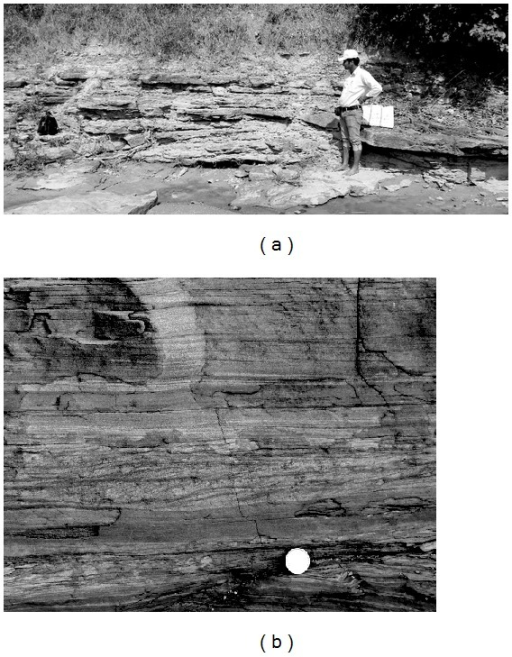 (a) The sandstone-siltstone-claystone facies exposed in the Kudaposi Nala, Talchir Basin. (b) Details of the sandstone-siltstone-claystone facies, exposed in the Khudia Nala, Raniganj Basin. Diameter of the coin is 2.3 cm.