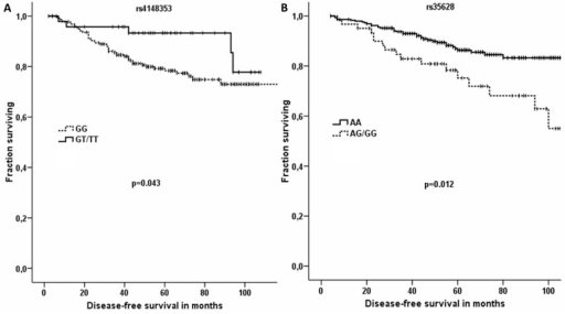 Significant associations between DFS of patients with breast carcinoma and SNPs in ABCC1.Kaplan-Meier survival curves for patients treated by chemotherapy (A) and hormonal therapy (B) were analyzed by Breslow test. In part A, dashed line represents DFS of patients with the GG genotype in rs4148353, while solid line indicates that of patients with the T allele. In part B, dashed line represents DFS of patients with the G allele in rs35628 and solid line DFS of those with the AA genotype. All SNPs have been analyzed but to retain concise style only significant associations are reported.