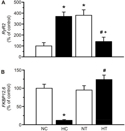 Gene expression of (A) RyR2 and(B) FKBP12.6 in left ventricles. NC:normotensive control; HC: hypertensive control; NT: normotensive trained; HT:hypertensive trained. Data are reported as means±SE of 5-6 animals in eachgroup. *P<0.05, compared to NC; #P<0.05, compared to HC;+P<0.05, compared to NT (two-way ANOVA followed by thepost hoc Tukey test).