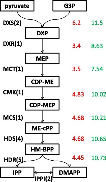 Expression level of unigenes involved in MEP pathway. The number in green represents the expression level of a particular unigene in PGT (log2 of estimate abundance of transcripts by RSEM value). The number in red represents the fold change in expression level when compared to leaf-PGT (log2 fold change between PGT and leaf-PGT). In cases of enzymes with more than one unigene, the unigene with the highest abundance was taken into consideration. The number in brackets represents the number of unigenes identified for each enzyme in the pathway. DXS: 1-deoxy-D-xylulose-5-phosphate (DXP) synthase; DXR: DXP reductoisomerase, MCT:MEP cytidyltransferase, CMK:4-(cytidine 5- diphospho)-2-C-methyl-D-erythritol kinase MCS: 2-C-methyl-D-erythritol 2,4-cyclodiphosphate (ME-2,4cPP) synthase, HDS: 1-hydroxy-2-methyl-2-butenyl 4-diphosphate (HMBPP) synthase, HDR: HMBPP reductase, IPPI : Isopentenyl diphosphate (IPP,C5) Delta-isomerase.