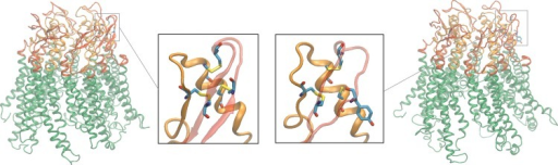 Cartoon representation of Cx26WT (left) and Cx26C169Y (right) hemichannels. The six connexins composing the hemichannels are drawn in ribbon; the extracellular loops (EC1 and EC2) are shown in orange and red (respectively). The insets show details of a single connexin; residues 53–180, 60–174 and 64–169, which in the wild-type structure are linked by disulfide bonds, are drawn in licorice representation.