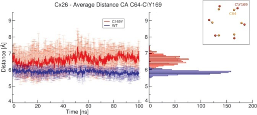 Distance between residues 64 and 169 during molecular dynamics simulation. The graph on the left shows average distances between α carbons of the two residues (inset) for the Cx26WT hemichannel (blue) and the Cx26C169Y hemichannel (red) as a function of time. Frequency histograms for the distribution of distance values are presented in the right panel. The absence of the disulfide bridge in the mutant results in a broader distribution, which is also shifted toward larger values.