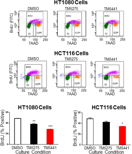 Decreased proliferation in cancer cells treated with TM5275 and TM5441.Representative fluorescence-activated cell sorting (FACS) plots are shown in the upper panels with BrdU positive cells (purple) shown within the upper gate. The mean percentage (± SD) of HT1080 and HCT116 BrdU positive cells after treatment with DMSO (white bar), TM5275 (black bar) or TM5441 (red bar) was graphed, n = 3. * indicates P values compared to DMSO controls < 0.05, ** indicates P < 0.01, and *** indicates P < 0.001.