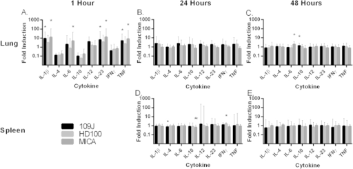 Inflammatory cytokine profile in response to respiratory introduction of predatory bacteria.qPCR analysis of IL-1β, IL-4, IL-6, IL-10, IL-12, IL-23, IFNγ, and TNF in response to intranasal inoculation of predatory bacteria relative to PBS control. Mice were inoculated intranasally with B. bacteriovorus 109J, HD100 or M. aeruginosavorus ARL-13. Expression of cytokines was assessed in the lung at (A) 1, (B) 24, and (C) 48 hours post-inoculation. Expression of cytokines was assessed in the spleen at (D) 24 and (E) 48 hours post-inoculation. Fold induction was calculated using the ΔΔCt by approximation method using an endogenous calibrator (β-actin). For the one hour experiment, 6 mice per predatory bacterial strain (and PBS) were used. Twelve mice per strain (and PBS) were used at each of the 24 and 48 hour time points, with the exception of the Lung/24 hour experiment, where 6 mice were used. Data for the one hour time point is from one experiment; data for the 24 and 48 hour time points are from two independent experiments. Data represent mean ± standard deviation. Student's t-test was performed to compare each treated sample to their respective control sample, *P < 0.05; **P < 0.01.
